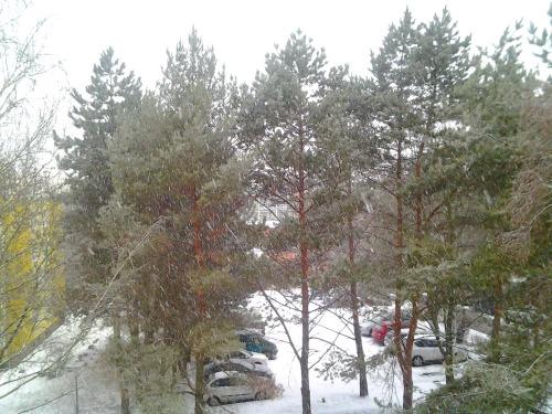Gz-brn-snow-20120215_80