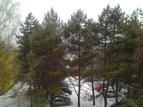 Gz-brn-snow-20120215_82